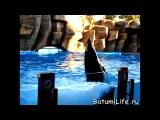 Батуми Дельфинарий